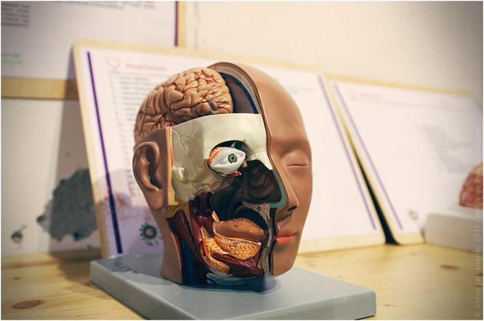Цікаві науки в музеї «Експеріментаніум» (12)