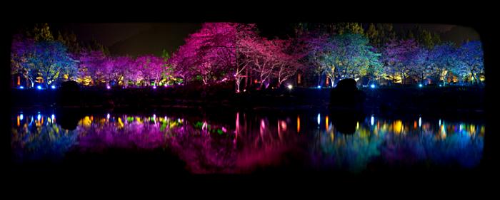 Фестиваль квітучої вишні. Дивовижне свято Cherry Blossom в Тайвані (3)