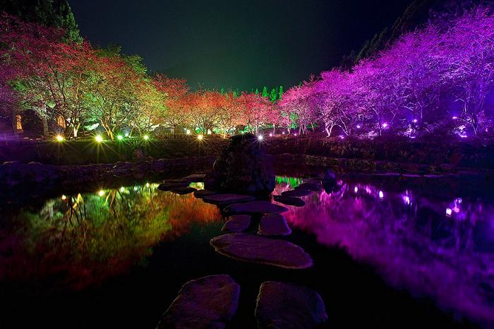 Фестиваль квітучої вишні. Дивовижне свято Cherry Blossom в Тайвані (4)