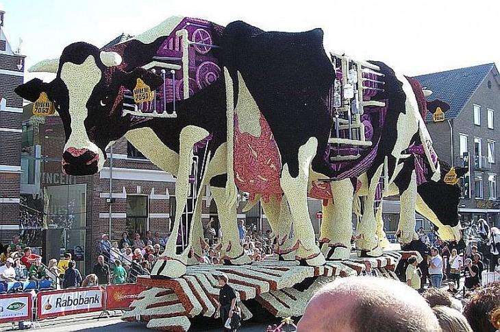 Грандіозний парад з квітів у Голландії (4)