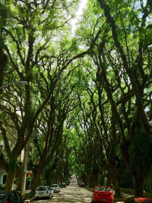 Найзеленіша вулиця світу - Руа-Гонсалу-де-Карвальо в Бразилії (1)