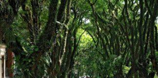 Найзеленіша вулиця світу - Руа-Гонсалу-де-Карвальо в Бразилії (2)