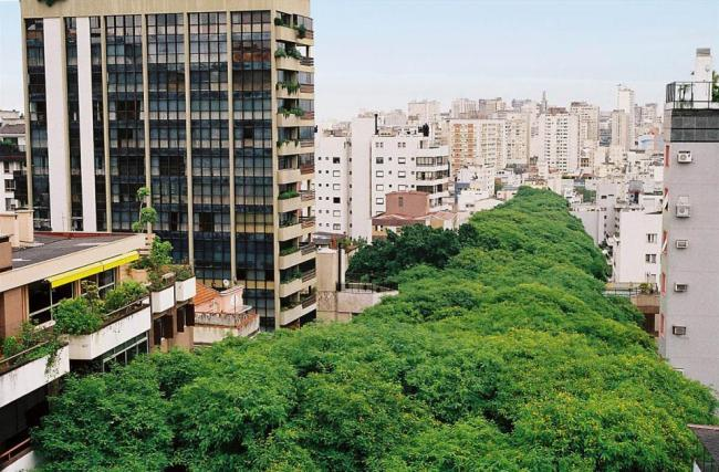 Найзеленіша вулиця світу - Руа-Гонсалу-де-Карвальо в Бразилії (3)