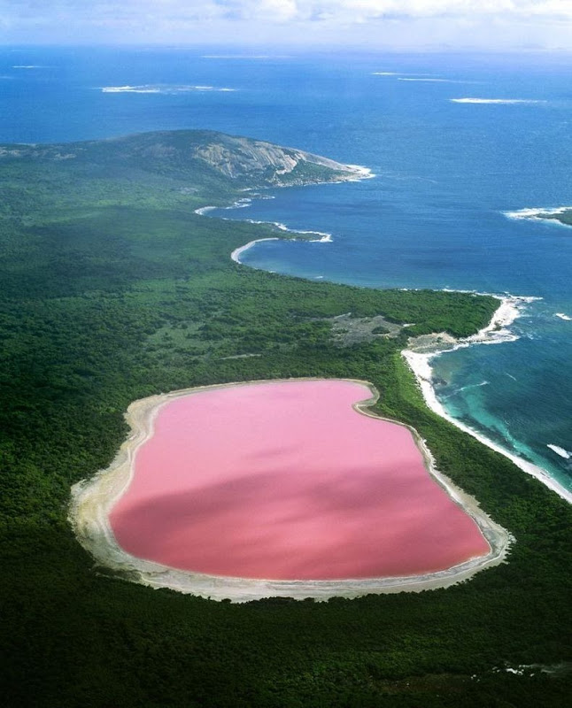 Рожеве озеро Хіллер (2)