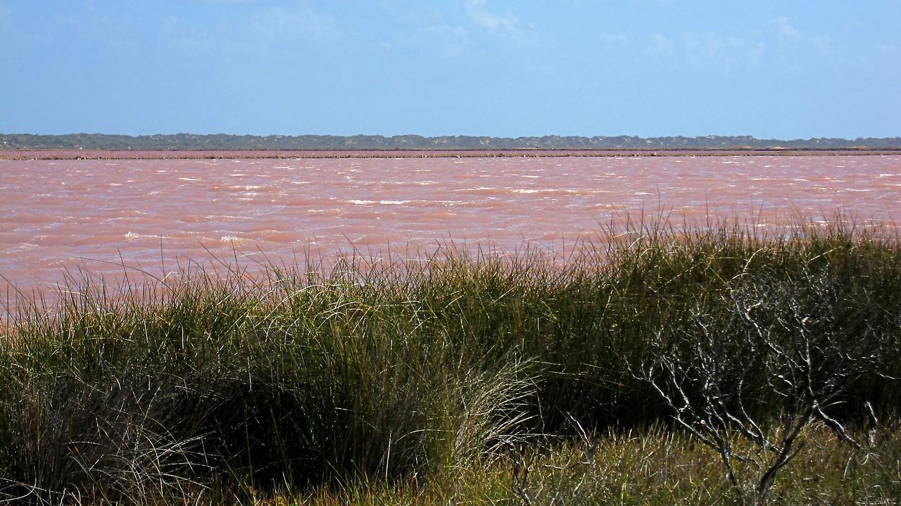 Рожеве озеро Хіллер (3)
