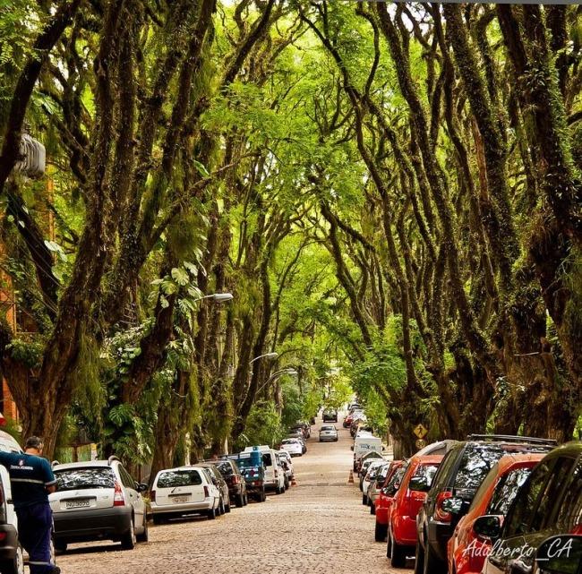 Найзеленіша вулиця світу - Руа-Гонсалу-де-Карвальо в Бразилії (5)