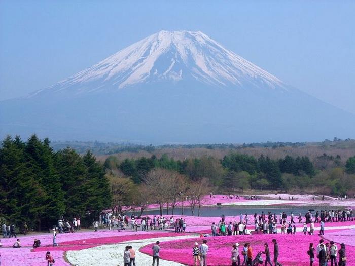 Весна в рожевих фарбах: квітучий парк Хіцужіяма (2)