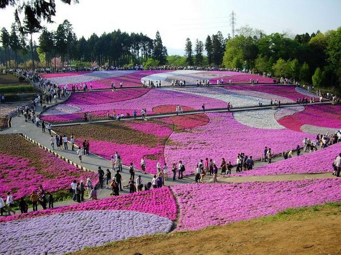 Весна в рожевих фарбах: квітучий парк Хіцужіяма (3)