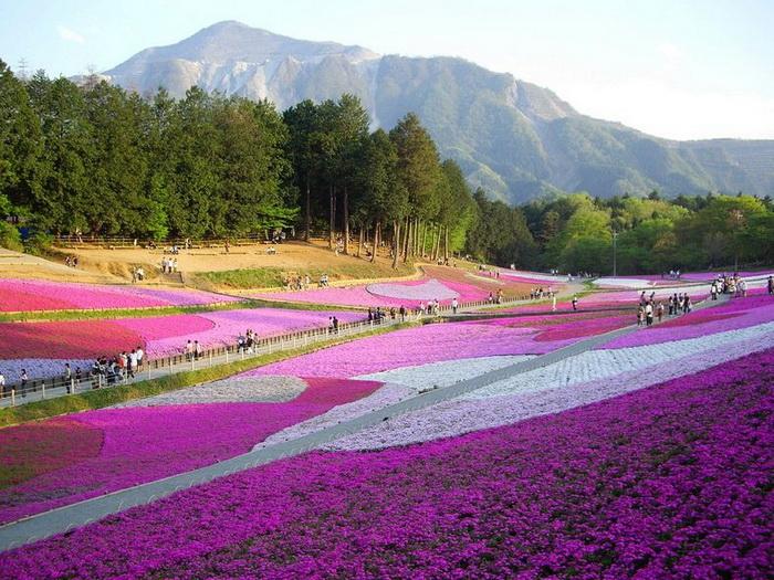 Весна в рожевих фарбах: квітучий парк Хіцужіяма (5)