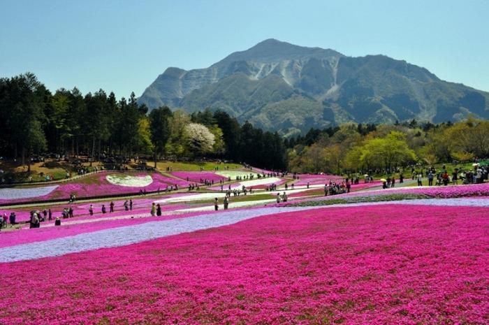 Весна в рожевих фарбах: квітучий парк Хіцужіяма (6)