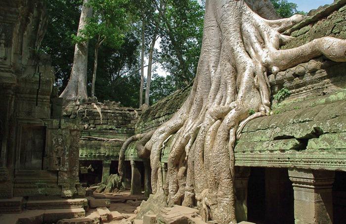 Симбіоз лісу і творіння людини: монастирський комплекс Та-Прохм (3)