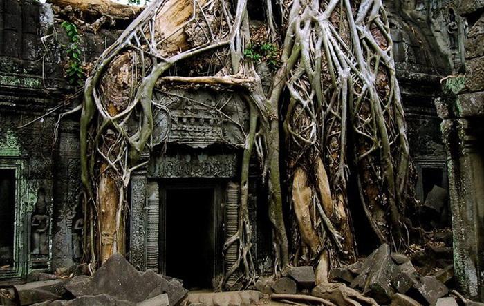 Симбіоз лісу і творіння людини: монастирський комплекс Та-Прохм (6)