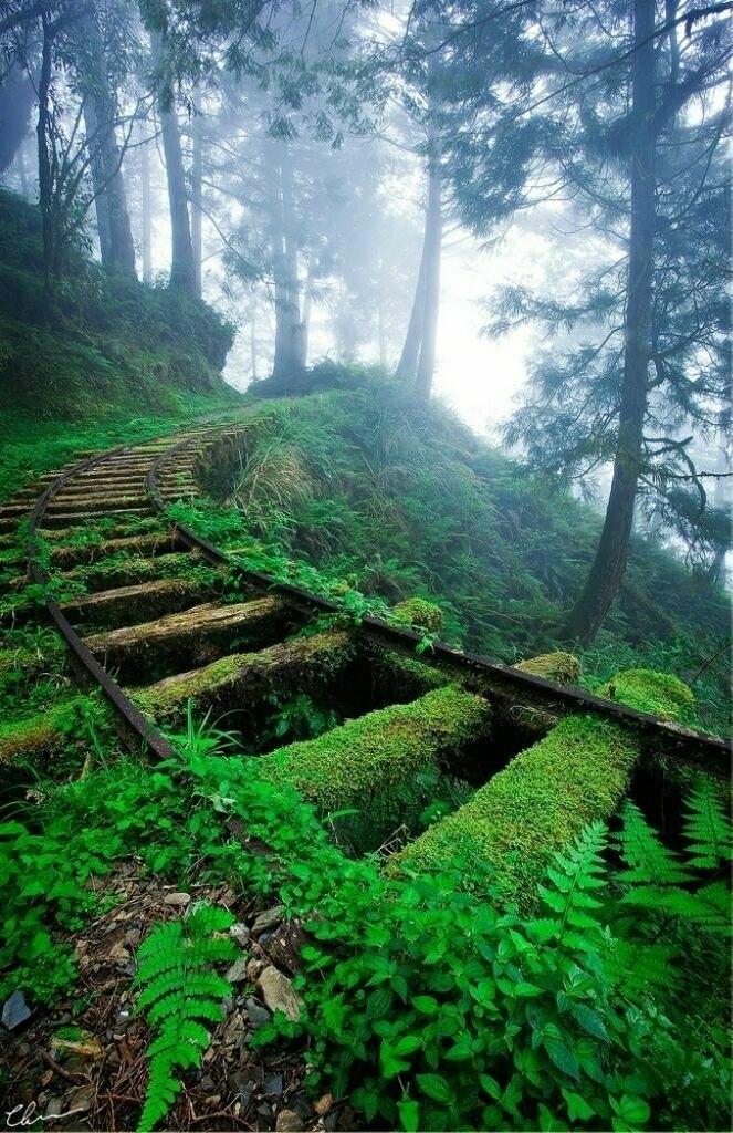 Містична краса занедбаних залізниць