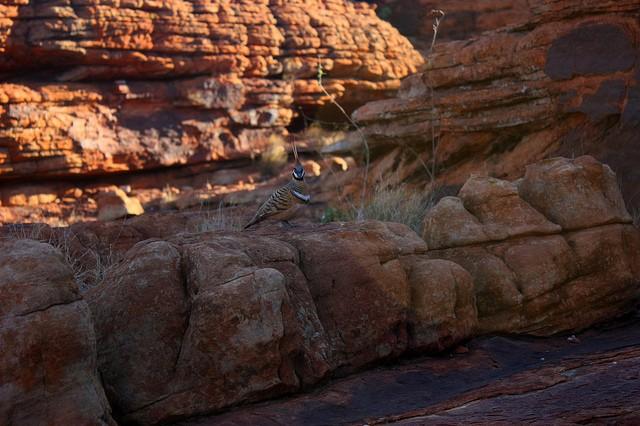 Королівський Каньйон, Австралія (12)