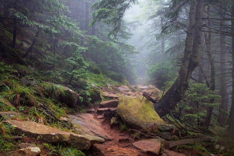 Карпатський ліс (Сергій Єршов)