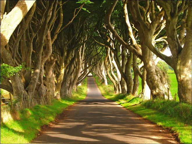 Химерний тунель Букова Алея, або Темна Алея (Dark Hedges) в Ірландії (фото) (2)
