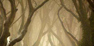 Химерний тунель Букова Алея, або Темна Алея (Dark Hedges) в Ірландії (фото) (6)