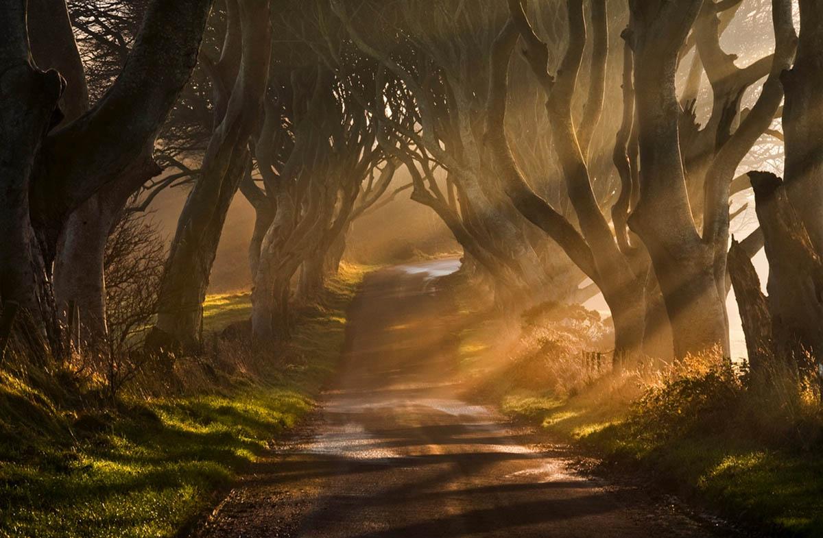 Химерний тунель Букова Алея, або Темна Алея (Dark Hedges) в Ірландії (фото) (7)