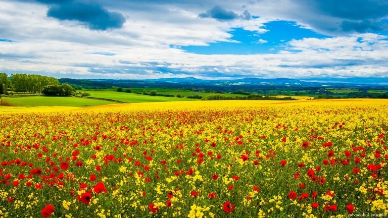 Так, я люблю Україну. 24 несподіваних фото української символіки 1383899225 3114407 nevseoboi