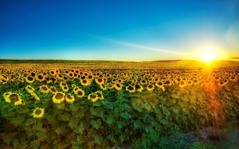 Так, я люблю Україну. 24 несподіваних фото української символіки 6165742 707d92ee