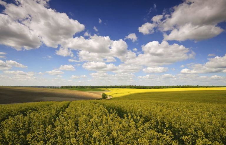 Так, я люблю Україну. 24 несподіваних фото української символіки 634540 32