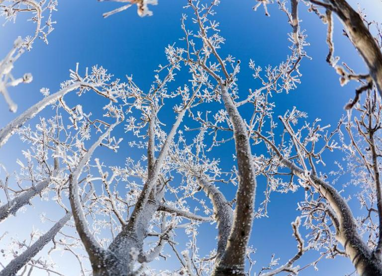 Beautiful crystals of frost on bare tree branches against clear blue sky