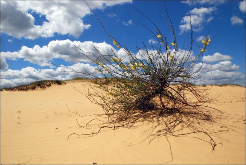 Олешківські піски - природне диво України та найбільша пустеля Європи