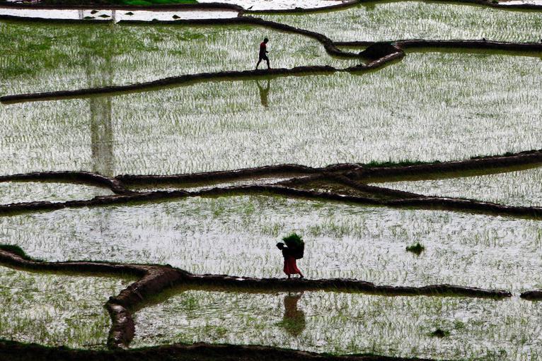 фото: Niranjan Shrestha/AP