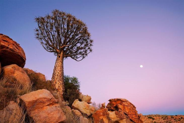 Фантастичні краєвиди пустельної Намібії (18)