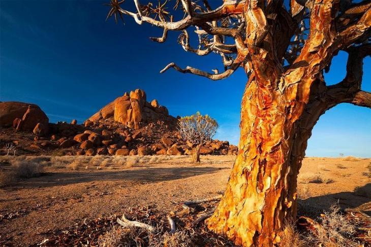 Фантастичні краєвиди пустельної Намібії (12)