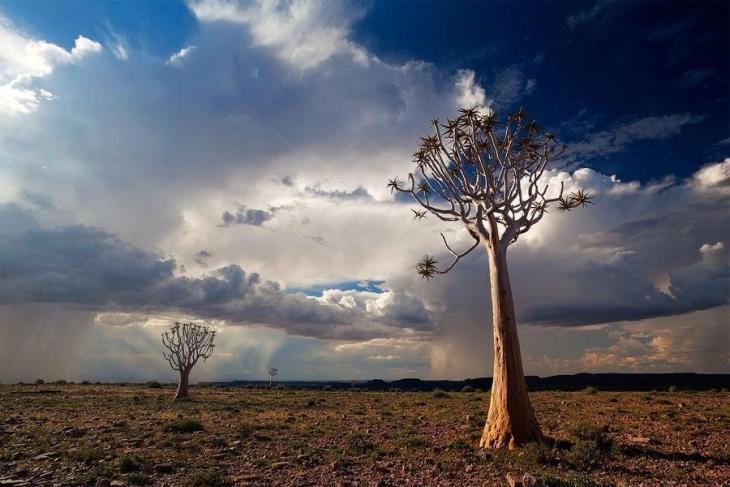 Фантастичні краєвиди пустельної Намібії (11)