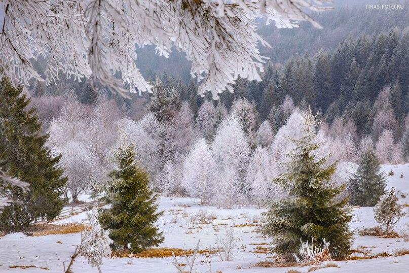 Карпати Фото: Олена Петренко
