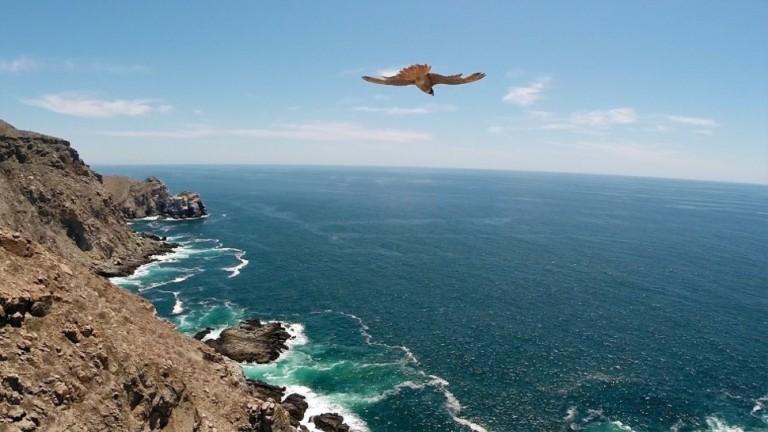dronecompetition26 36 дивовижних фото з першого конкурсу дрон фотографії