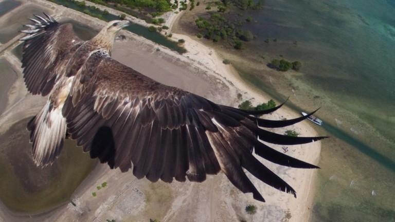 dronecompetition36 36 дивовижних фото з першого конкурсу дрон фотографії