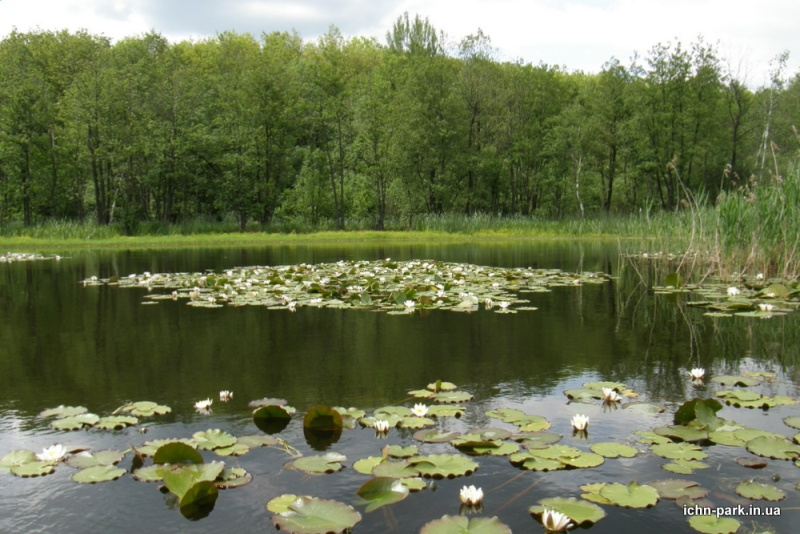 фото: іchn-park.in.ua