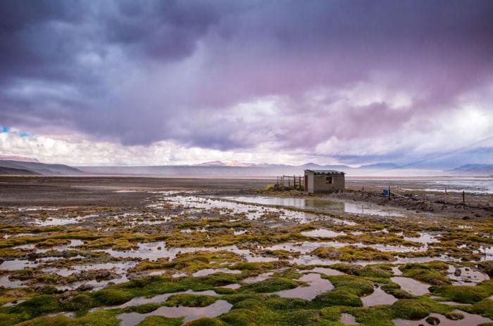 Лагуна-Колорадо. Болівія. Автор фото: Antony Harrison.