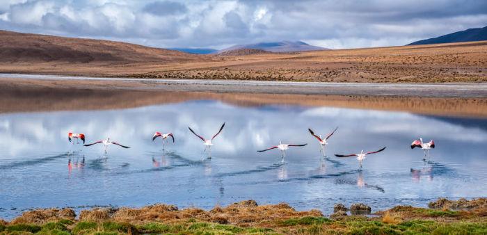 Танець фламінго. Болівія. Автор фото: Antony Harrison.