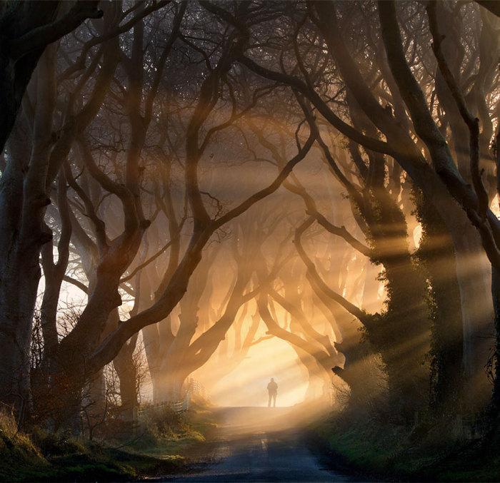 Тунель з дерев в 1 епізоді 2 сезону: букова алея «Темна огорожа» (Дарк Хеджес / Dark Hedges) у графстві Антрім, Північна Ірландія. Автор фото: Стівен Емерсон.