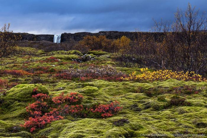 На північ від Вестерос: долина Тінґветлір (Тінгвеллір), Ісландія.