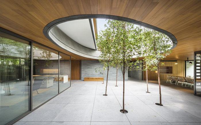 Дерева, що ростуть у дворі