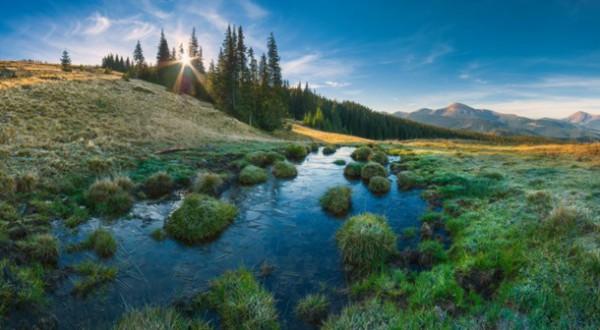 Віталій Башкатов: «Карпатський морозний ранок. Карпатський біосферний заповідник»