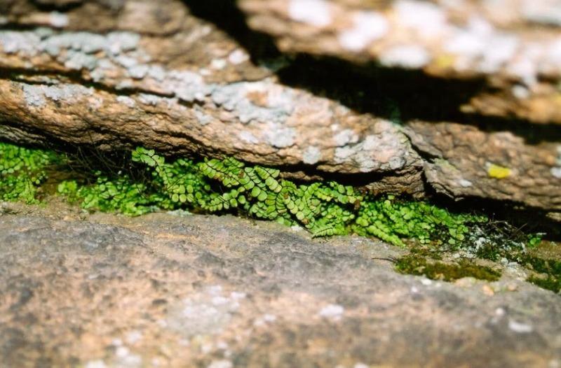 Проростаючи крізь каміння фото: Slava Pogrebnyak