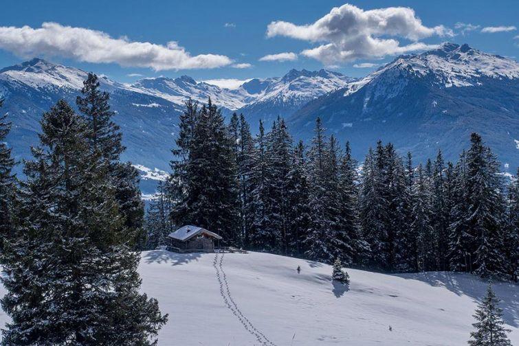 будиночок в лісі, снігові пейзажі