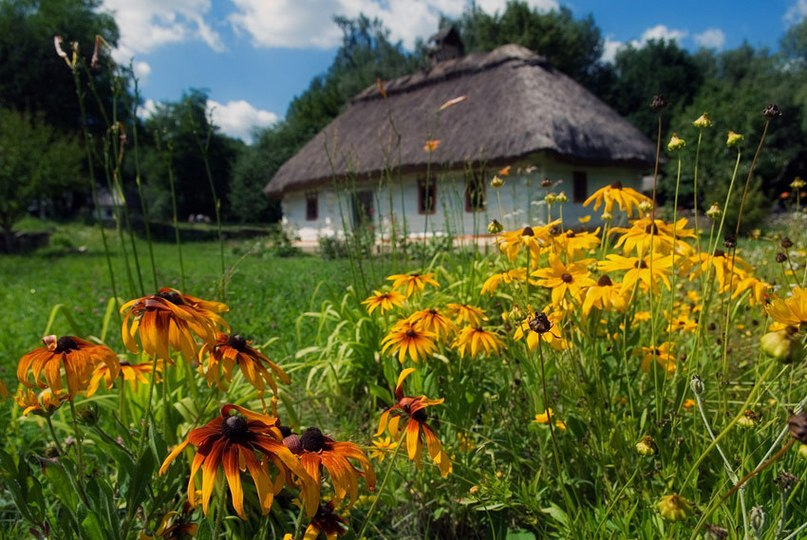 Літо в Пирогові