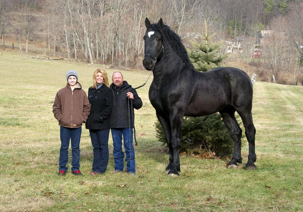 Кінь породи першерона