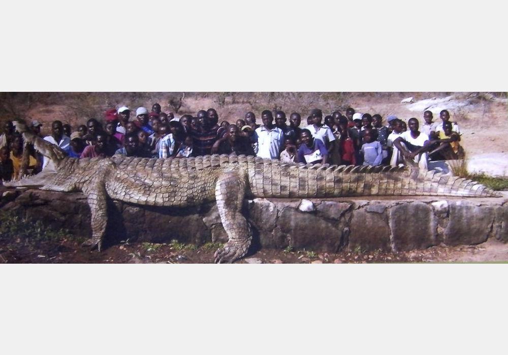 Найбільший крокодил