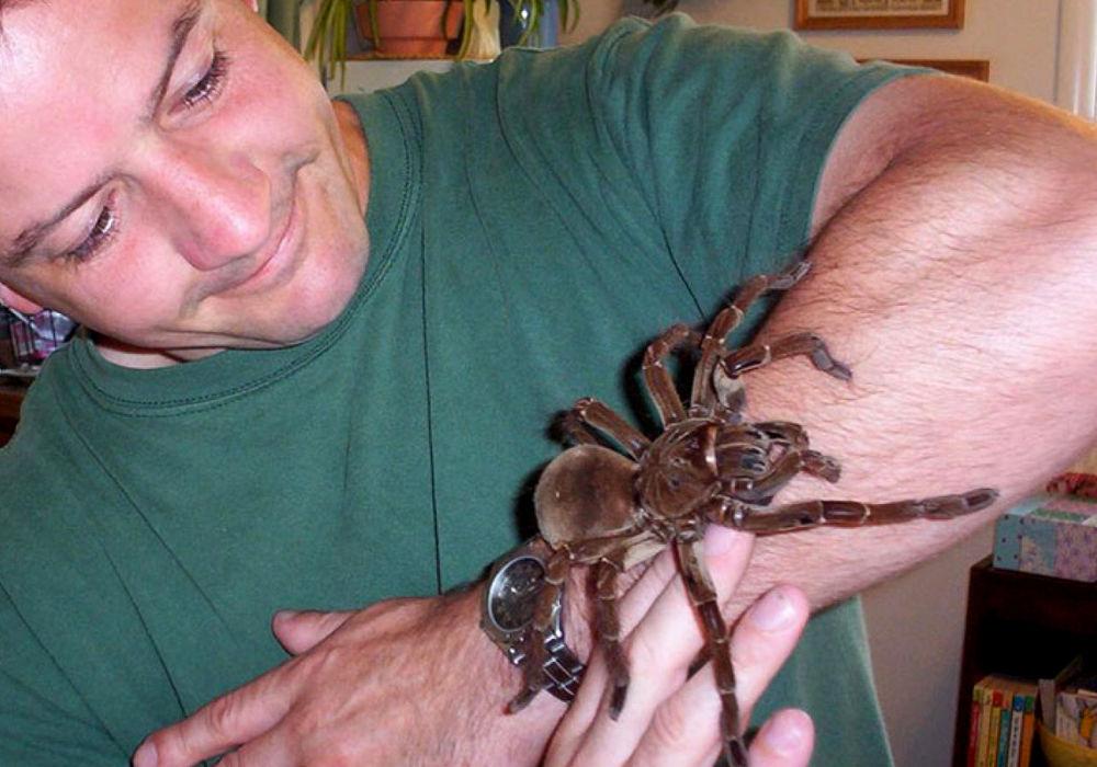 Гігантський тарантул