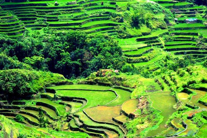 Рисові тераси Банауе