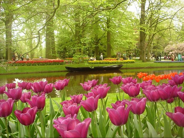 Найбільший квітник в світі, відомий як Сад Європи