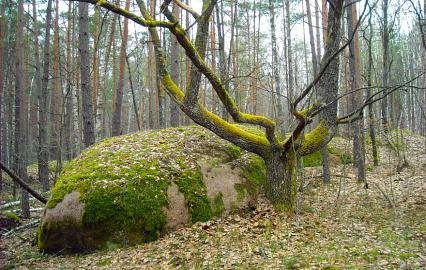 Фото: go2lavka.com